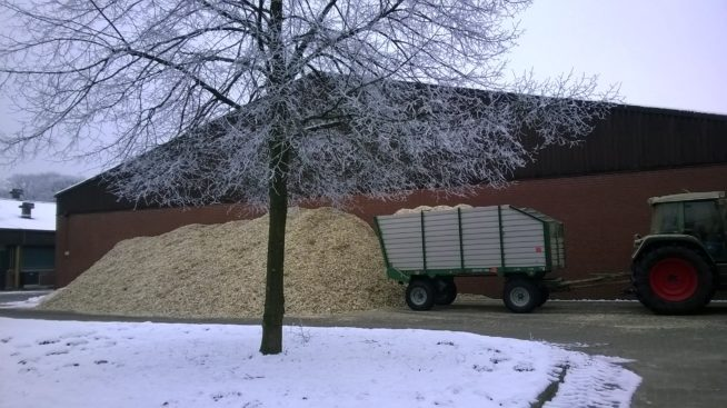 Woodchips from willow for energy production