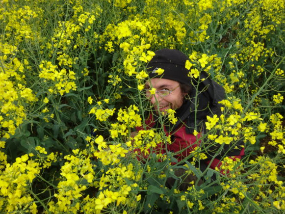 Hide and seek in rape field at SIGNAL site Wendhausen