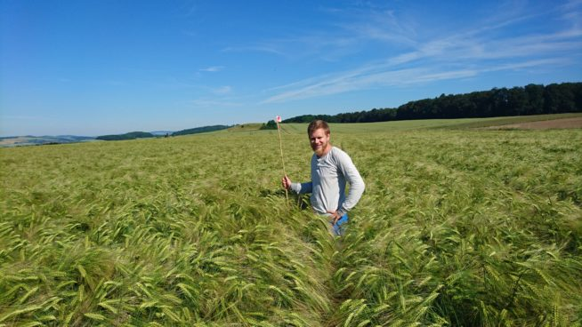 In the midst of maturing barley
