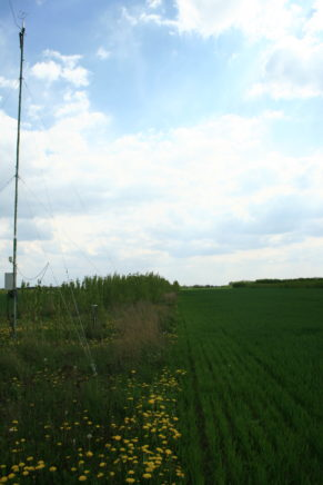 Site Forst, mast on agroforestry plot