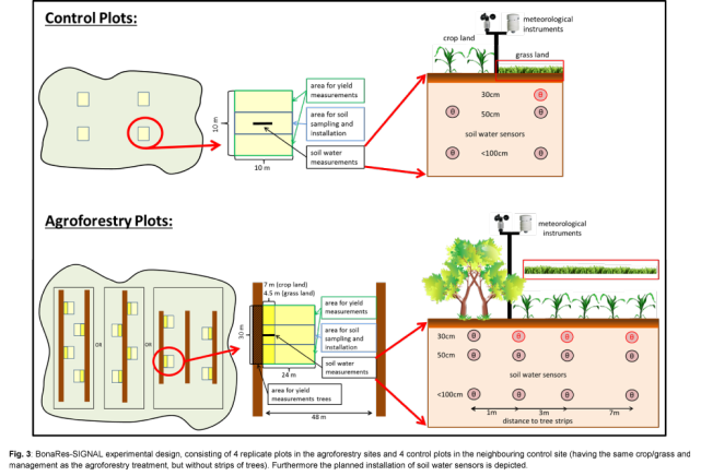 Fig. 3: BonaRes-SIGNAL experimental design, consisting of 4 replicate plots in the agroforestry sites and 4 control plots in the neighbouring control site (having the same crop/grass and management as the agroforestry treatment, but without strips of trees). Furthermore the planned installation of soil water sensors is depicted.